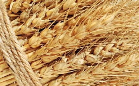 Against the background of recovery in global demand, wheat prices are rising