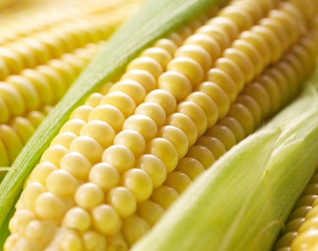 Corn prices in Ukraine are restored after the fall