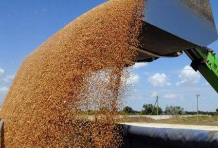 The total volume of grain production in the CIS  countries will amount to 189 million tons