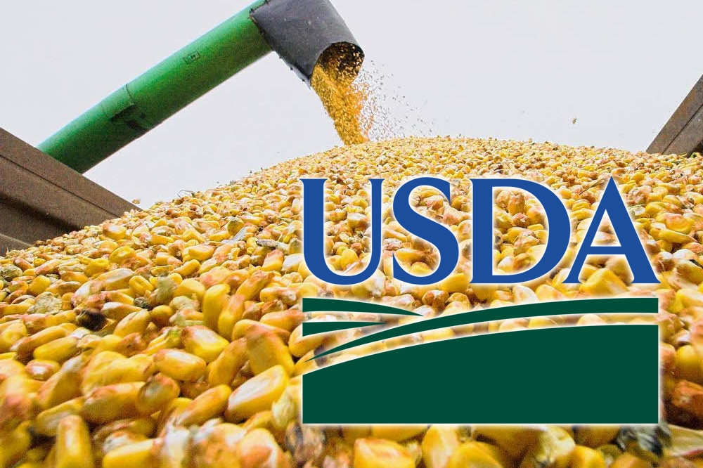 Corn prices increased by 5% after an unexpected decline in crop forecast for the United States