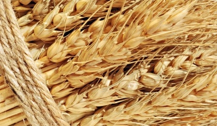 Frost in the United States support price for wheat
