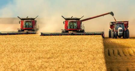 Wheat harvest in Ukraine and Russia may be at the level of last year