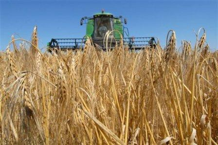 The MARS Agency predicts an increase in grain yield in EU