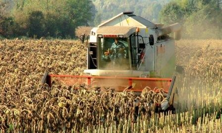 In Ukraine winter crops planted 94% of the planned areas