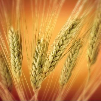 Global wheat prices turned down