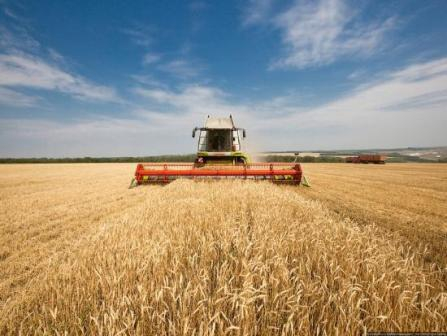 COPA-COGECA has reduced the forecast of grain production for the EU