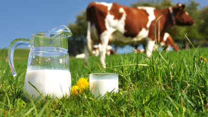 The production cuts led to a rise in milk prices