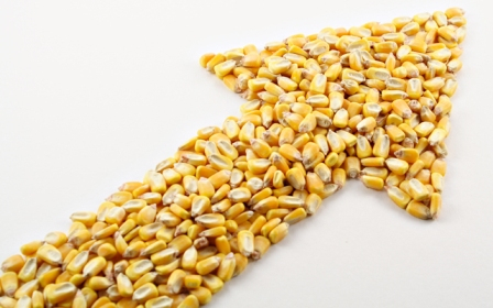 Corn prices reached the level of wheat