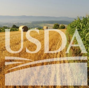 The USDA predicts increased demand for corn in the new season