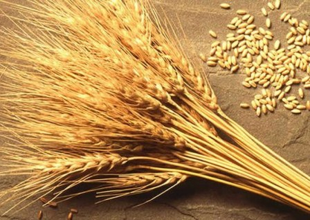 Wheat stock exchange reacted to the USDA report drop in prices