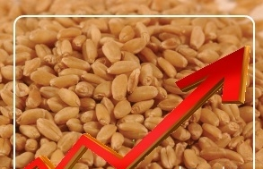 The Egyptian tender and speculators support the wheat quotations