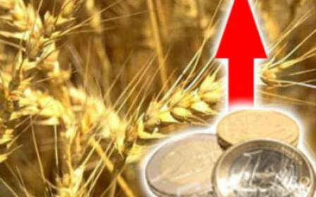 Egypt overpaid for wheat against the background of a reduction in the number of sellers