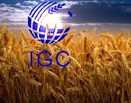 IGC has greatly increased the estimate of world ending stocks for wheat and corn
