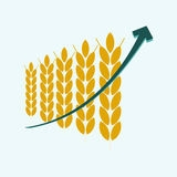 After the collapse of the speculative prices of wheat in the United States began speculative growth