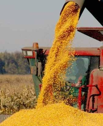 Prices on Ukrainian corn continues to grow