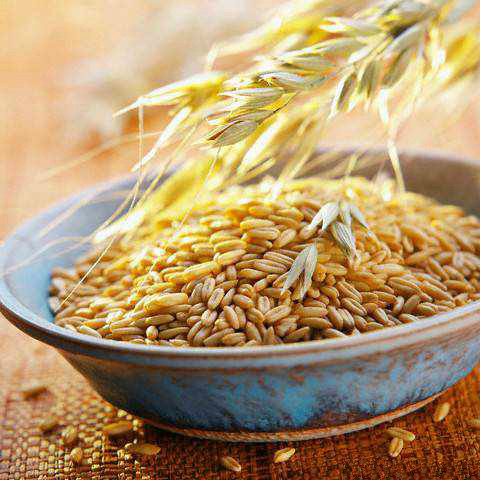 Prices supports demand for barley by Saudi Arabia
