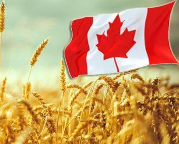 Stature of Canada sharply lowered the forecast of grain production