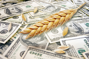 Activity in the wheat market grows