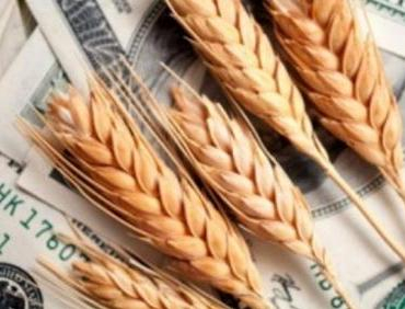 Wheat prices grow due to dry weather