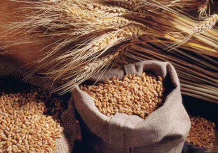 The beginning of the week was marked by a fall in the price of wheat