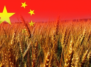 Domestic exporters may lose the grain market of China