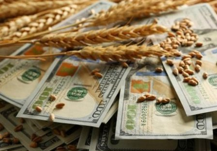 Wheat markets continued speculative growth