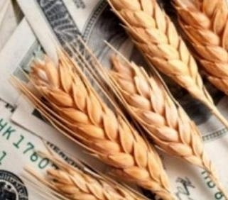 Stocks of wheat in the new season reached a record value
