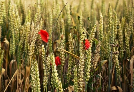Speculative rise in wheat prices in Europe supported the American stock exchange