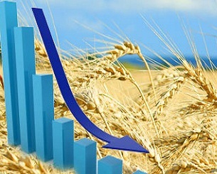 Speculators collapsed the price of wheat