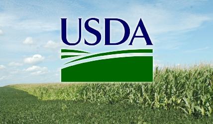 USDA predicts decrease in carryover and increased consumption of maize in the new season