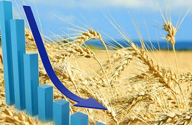 A record harvest in Russia and the improvement in the weather in Australia put pressure on wheat prices