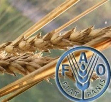 The FAO increased its forecast for global grain production in 2018