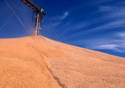 The agriculture Ministry estimates the grain harvest in 2017/18 MG 62 million tons
