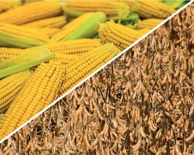 In the grain market, the greatest demand is for corn and soy