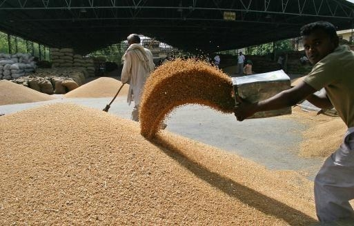 Egypt bought 300 thousand tons of Romanian and Russian wheat production