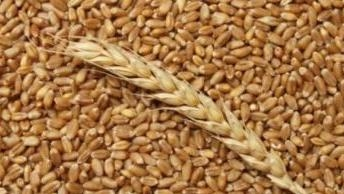 U.S. wheat continues to win back losses