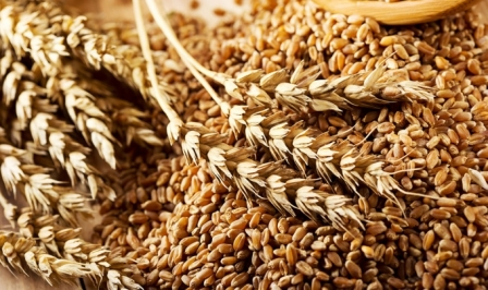 Wheat prices Monday began the decline