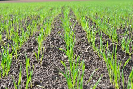 Ukrainian winter crops are in good and satisfactory condition