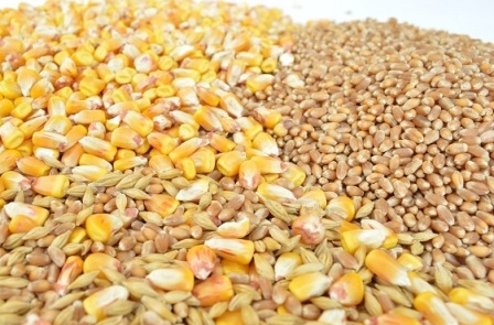 Export of corn from Ukraine and prices remain stable