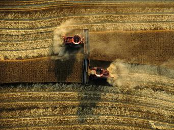 In the black sea region harvest during the active phase
