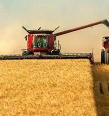 The rate of harvest of grain in Kazakhstan and Siberia twice lower than last year