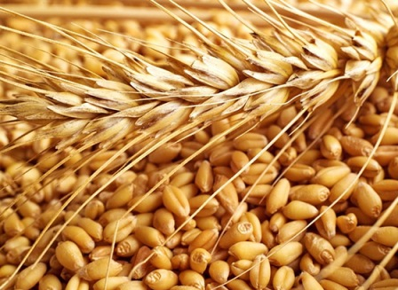 The wheat market in anticipation of balances of production