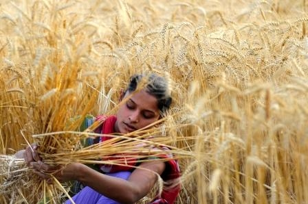 India reduced the import duty on wheat to 10%