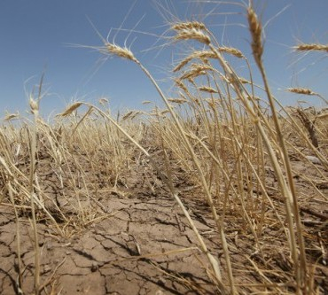 The lack of rainfall supported wheat prices