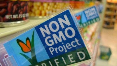 In the United States presented a report on the safety of GMOs