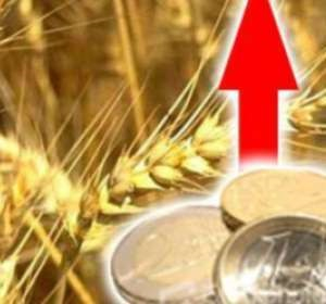 Concern about the fate of the new harvest raises the price of wheat