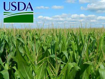 Double impact USDA in the price of corn