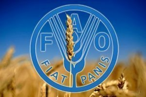 The Ministry of agrarian policy signed with FAO a cooperation agreement