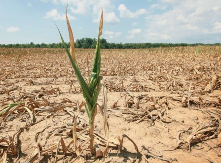 Hot weather adversely affects crop
