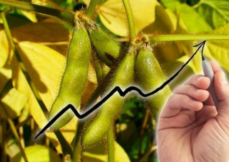 USDA raised its forecast of soybean production in the season 2016/17 MG